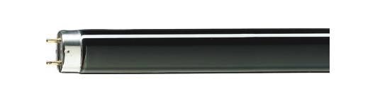 Philips UV40 120cm Tube T8 BLB 36W